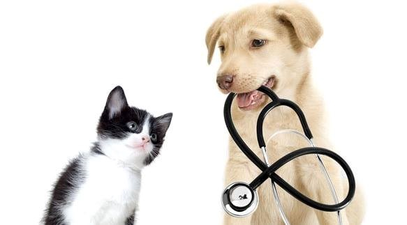 Cat and dog stethescope